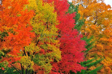 fall color fall colors wallpapers gallery