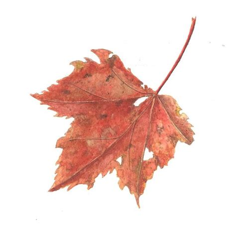 images  leaf drawings  pinterest leaves