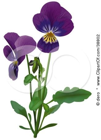 pansy clipart clipart panda free clipart