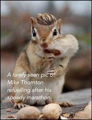 Funny Animals with Nuts
