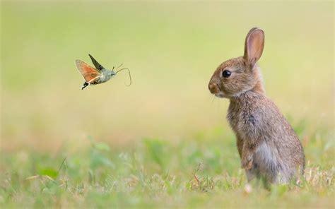 foto de Téléchargement gratuit fond d écran de lapin nain