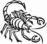 Scorpion Coloring Pages Animals Drawing Sheet Cartoon Printable Animal Print Town Clipartbest King Getdrawings Clipart sketch template