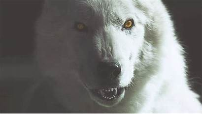 Wolf Werewolf Latest Aesthetic Funny Rpg Hemlock