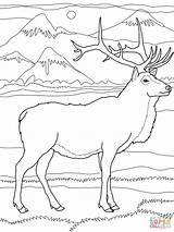 Elk Coloring Pages Printable Wapiti Deer Bull Drawing Supercoloring Super Colouring Adult Easy Nature Sheets Drawings Running Lion Visit sketch template