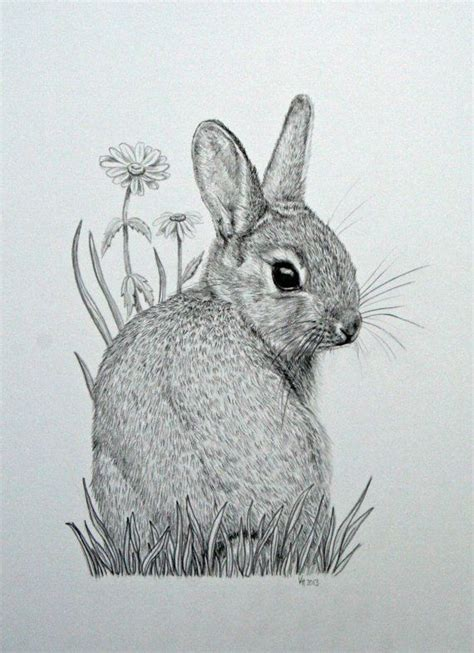 Rabbit Drawing Original Mounted Pencil Drawing Of Baby Bunny Rabbit With