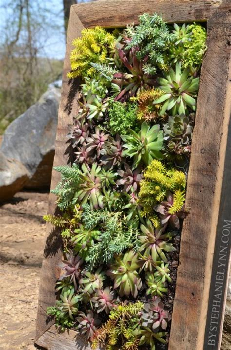 succulent wall planter top 10 diy outdoor succulent garden ideas top inspired
