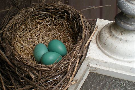 removing birds nests