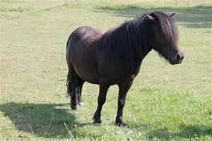 Heu Kaufen Für Pferde : ern hrungsberatung f r pferde in zirndorf kaufen und verkaufen ber private kleinanzeigen ~ Orissabook.com Haus und Dekorationen