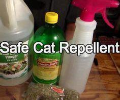 friendly  effective cat repellent cat care tips