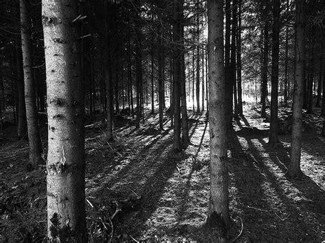 Fototapete Wald Schwarz Weiß by Wald Schwarz Weiss Alberts Fotografie Galerie