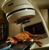 Anal radiation therapy dogs