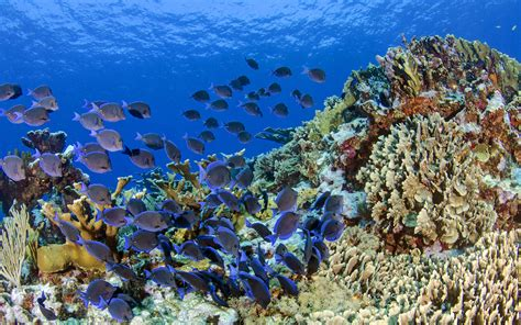 Both diversity and abundance are key to coral reef health • Earth.com