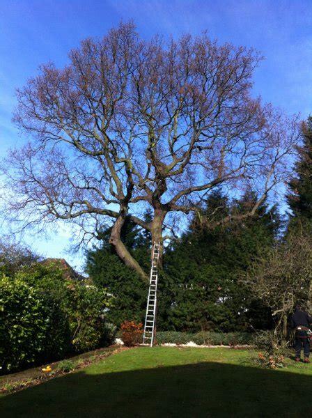 gallery  tree clinic london