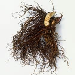 Black cohosh - Herbal Remedies to Avoid - Health.com  Fibromyalgia Black Cohosh