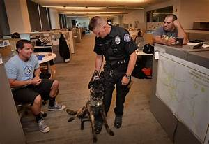 Behind the Badge - Westminster's newest K-9 delivers ...