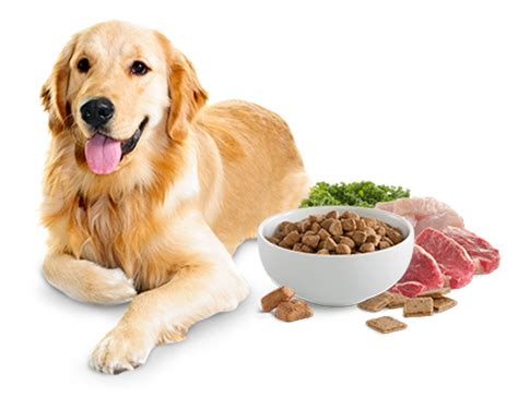wellness pet food   mealtime counttm