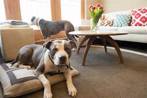 Two pitties in the city doggystyle on dog friendly furniture for Dog room furniture
