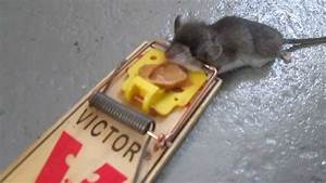 Dead Mouse In A Trap Funny