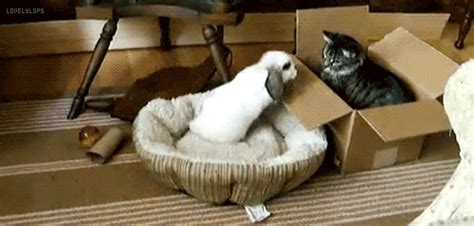 confused cat gif find on giphy