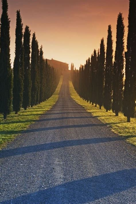 Trees Italy Roads iPhone 4s Wallpaper HD Free Download