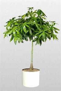 8 best images about Feng Shui Plants on Pinterest | Ferns ...