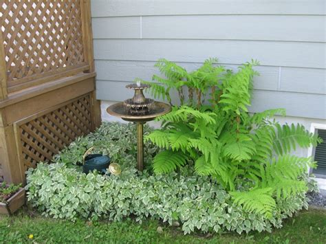 plante d ombre exterieur vivace foug 232 re et herbe aux goutteux