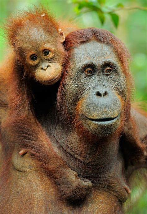rainforest jungle images  pinterest monkeys