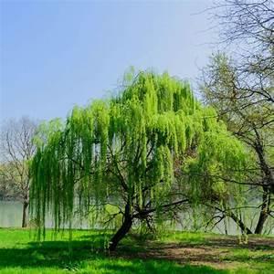 Arbre Ombre Croissance Rapide : arbres croissance rapide liste ooreka ~ Premium-room.com Idées de Décoration