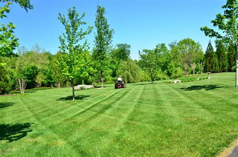 Backyard Grass by Free Images Tree Grass Structure Lawn Meadow