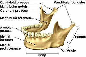 Bones Of Skull Lab Review