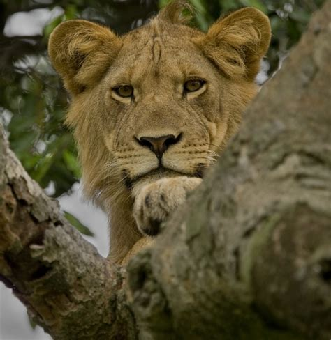uganda wildlife