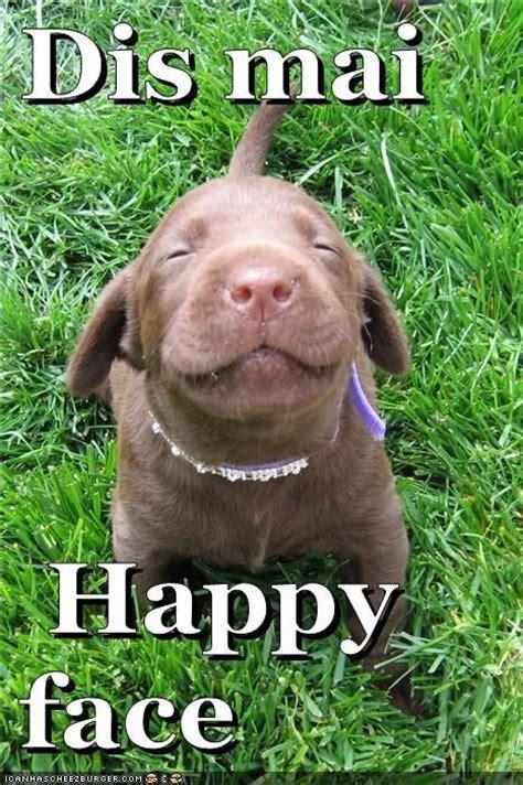 Funny Dog Face Meme - happy face funny dog meme funny animals pinterest meme dog and animal