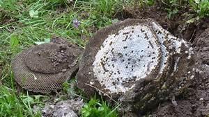 Nid De Guepe Dans La Terre : que faire en pr sence d 39 un nid de gu pes ou de frelons ~ Melissatoandfro.com Idées de Décoration