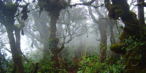 The Mossy Forest Of Gunung Brinchang