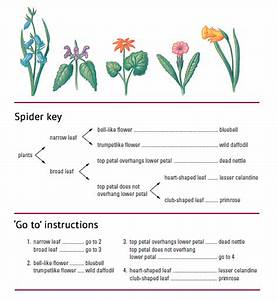 5.2 Applications and skills: 5.2.3 Recognising plant phyla ...