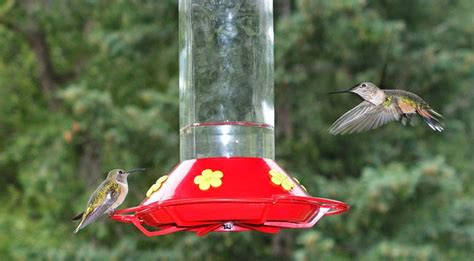 What Is The Mixture For Hummingbird Feeders