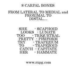 Carpal Bones Mnemonic