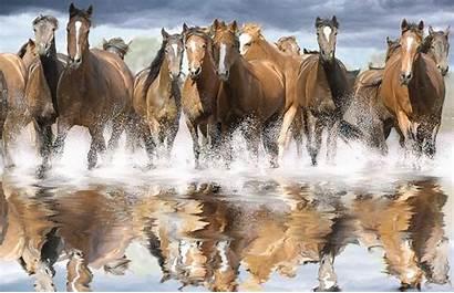 Horses Wild Wallpapers Horse Desktop Herd Camera
