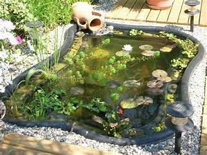 Bassin De Jardin Pour Poisson : quel poisson pour un bassin de jardin bassin de jardin ~ Premium-room.com Idées de Décoration