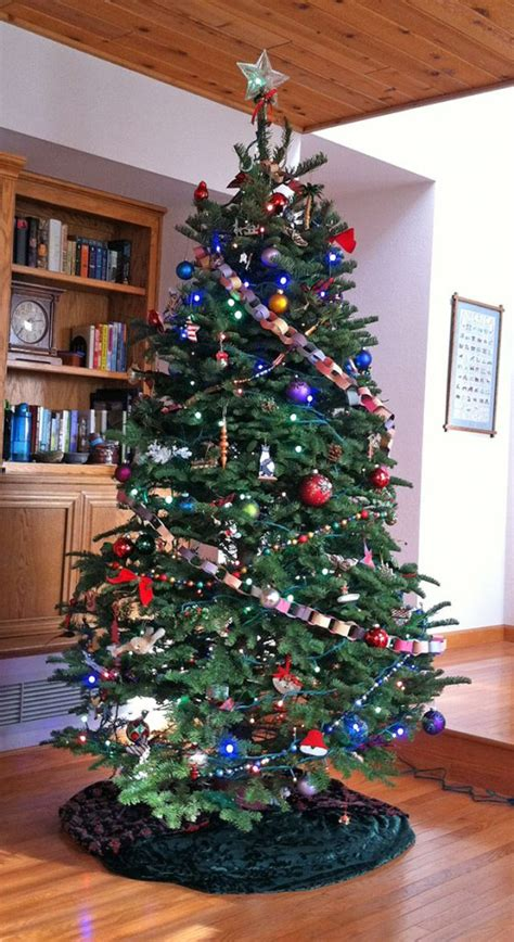 decorated real christmas tree december  green