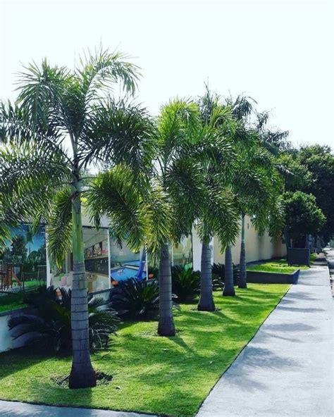 10 tipos de palmeiras para decorar sua casa! - Entenda Antes