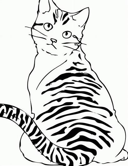 Coloring Cat Pages Cats Tabby Printable Striped