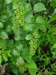 cbd content of hemp seeds