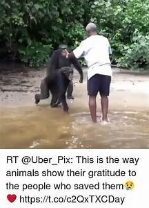 Rt, This, Is, The, Way, Animals, Show, Their, Gratitude, To, The, People, Who, Saved, Them, Ud83d, Ude22, Ufe0f