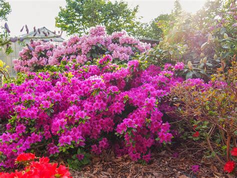 Garten Und Landschaftsbau Rosengarten by Rosengarten Garten Und Landschaftsbau Crivitz Gmbh