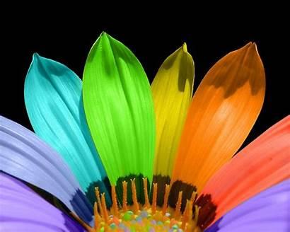 Flower Petals Wallpapers Resolutions Normal 1024 1280