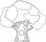 Tree Coloring Pages Oak Drawing Outline Colouring Trunk Leaves Printable Banyan Without Print Drawings History Getcolorings Getdrawings Paintingvalley Popular Coloringhome sketch template