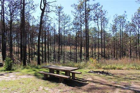 kisatchie national forest grand canyon  la sharing