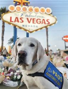 Caber helps vegas heal for Dog days las vegas