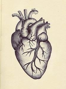 Image Result For Vintage Anatomical Heart Diagram